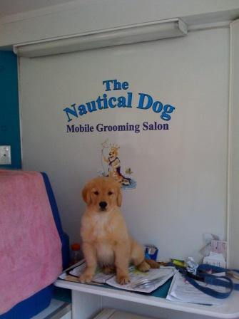 The nautical dog moblie grooming salon bthenauticald solutioingenieria Choice Image